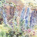 Watercolour painting Delphiniums at Haddon Hall